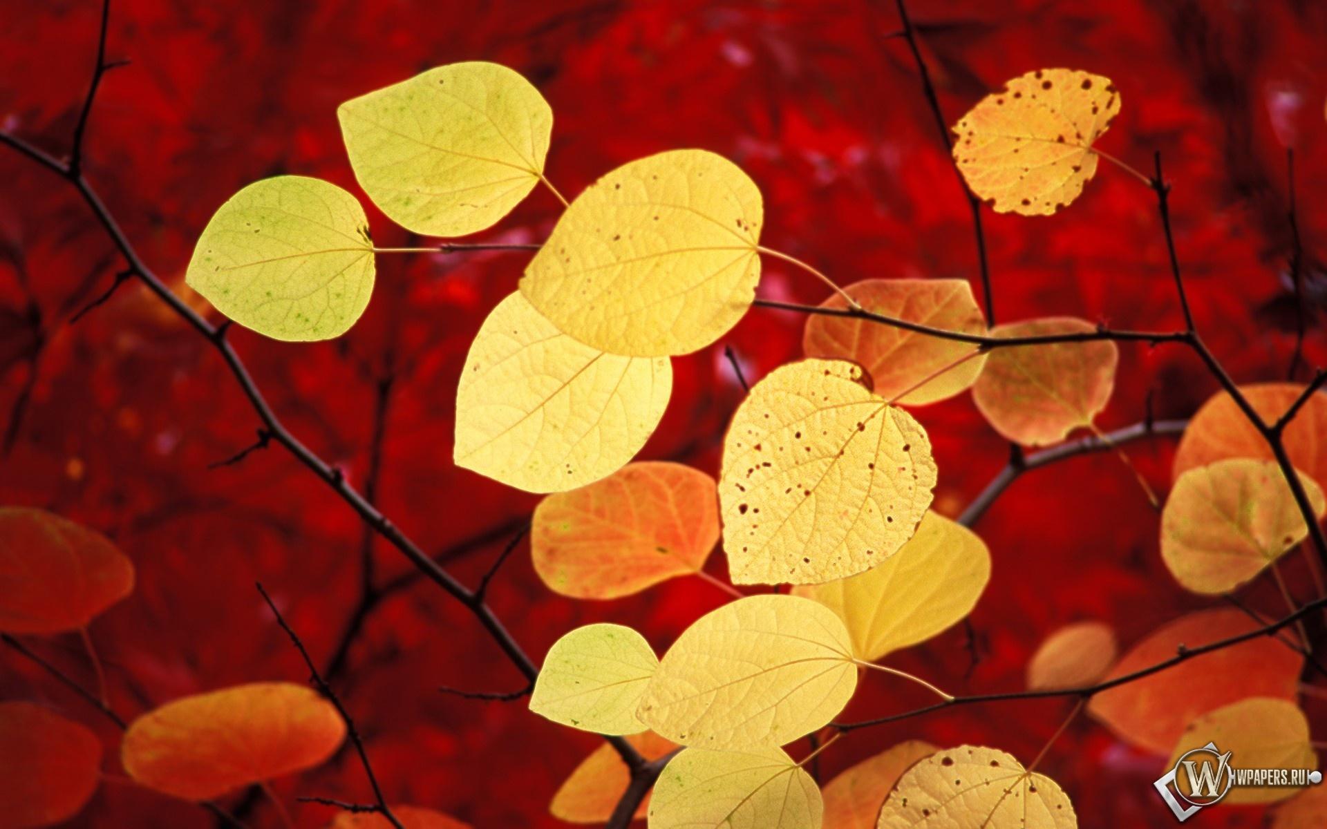 Жёлтые листья 1920x1200