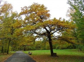 Обои Осень пришла: Деревья, Осень, Листва, Осень