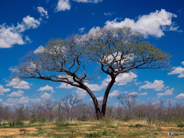 Опавшее дерево осенью