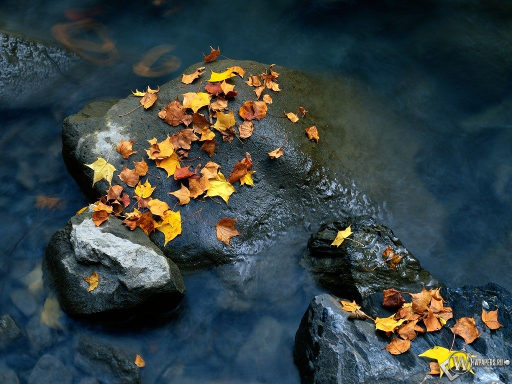 Осенняя листва на камнях 1024x768