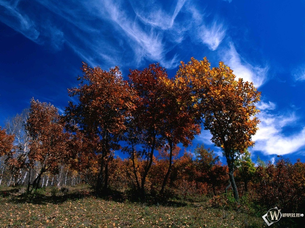 Осенние деревья 1024x768