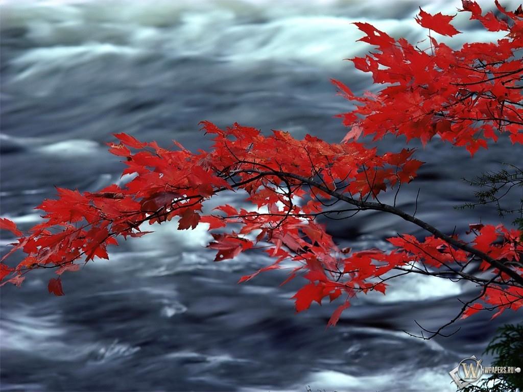 Красная листва дуба над рекой 1024x768