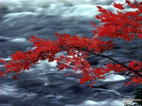 Красная листва дуба над рекой