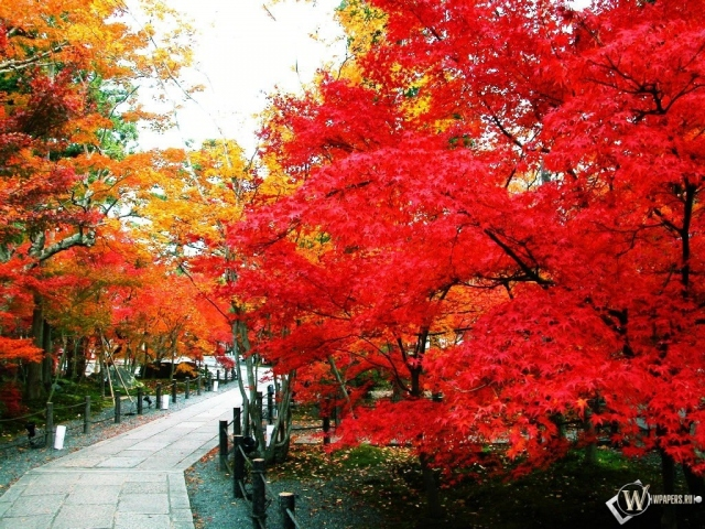 Тропинка осенью