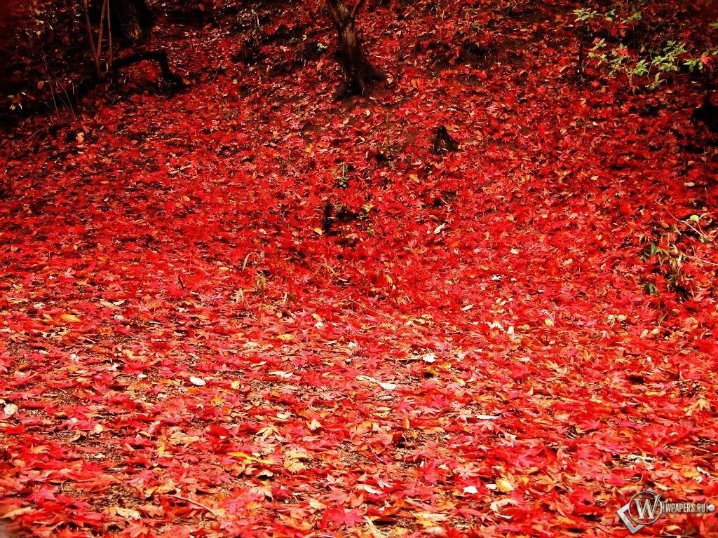 Осенняя листва 1024x768