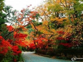 Обои Осенняя тропинка: , Осень