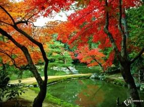 Обои Осенний парк: , Осень