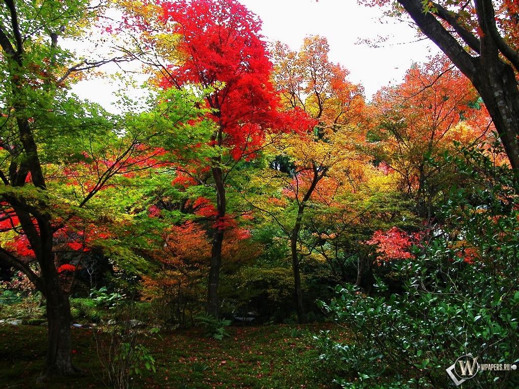 Осенний лес 1024x768