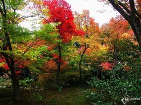 Обои Осенний лес: , Осень
