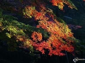 Дуб осенью