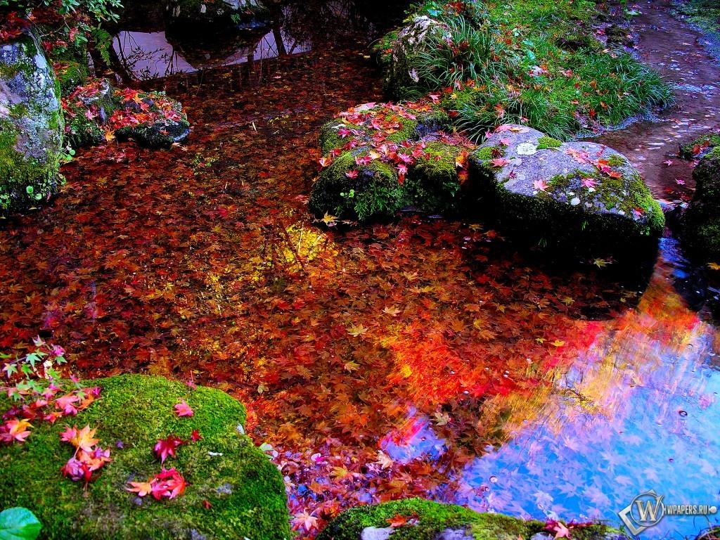 Листья в осеннепм пруду 1024x768