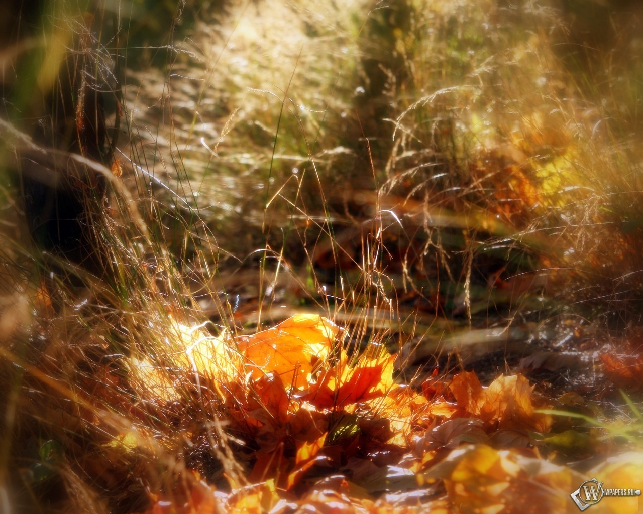 Осеньняя макросъемка 1280x1024
