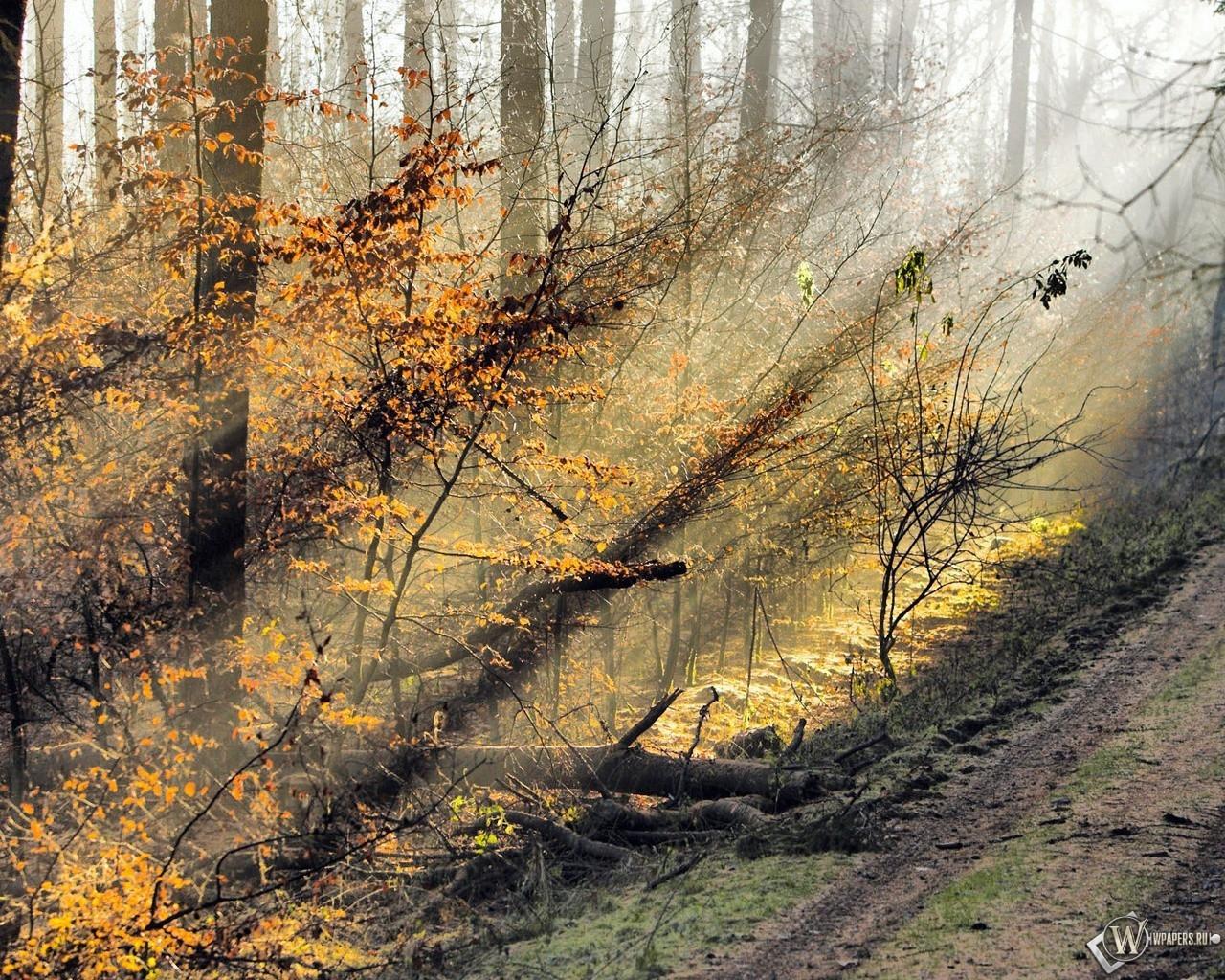Осень в солнечном свете 1280x1024
