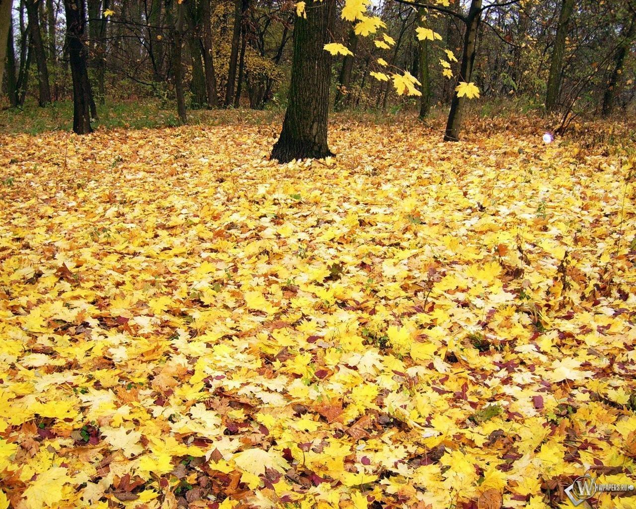 Кленовые листья 1280x1024