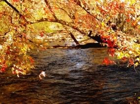 Обои Осень: Лес, Ручей, Осень