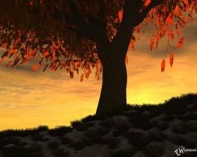 Обои Осенний закат: , Осень