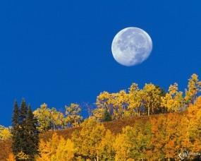Обои Осенняя луна: Огромная луна, Лесок на холму, Осень