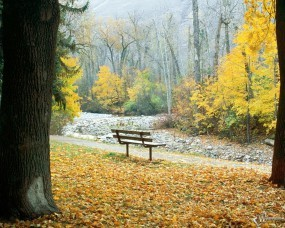 Обои Осенняя аллея: Осенний лес, Парк, Скамеечка, Золотая пора, Осень