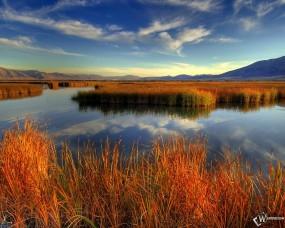Обои Осеннее озеро: Заросли, Озеро, Камыши, Осень, Осень