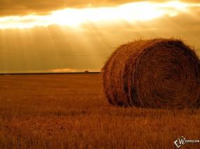 Осеннее поле