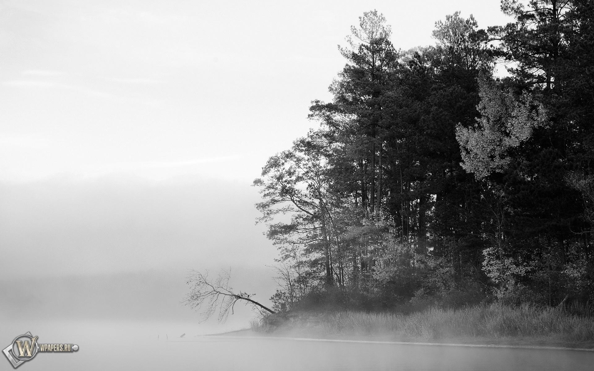 Туманный лес 1920x1200