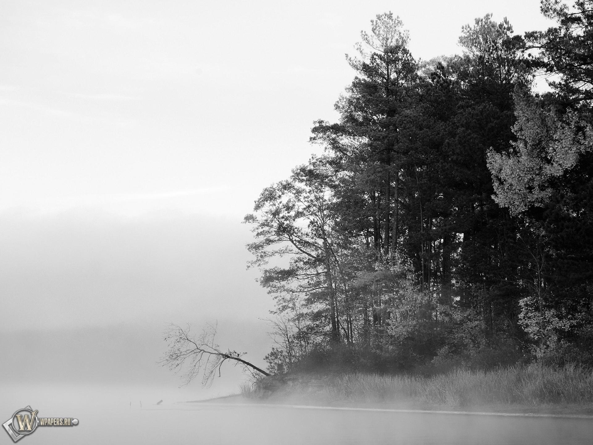 стол лес на рабочий фото туманный