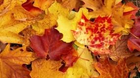 Обои Осенняя листва: Осень, Листья, Осень