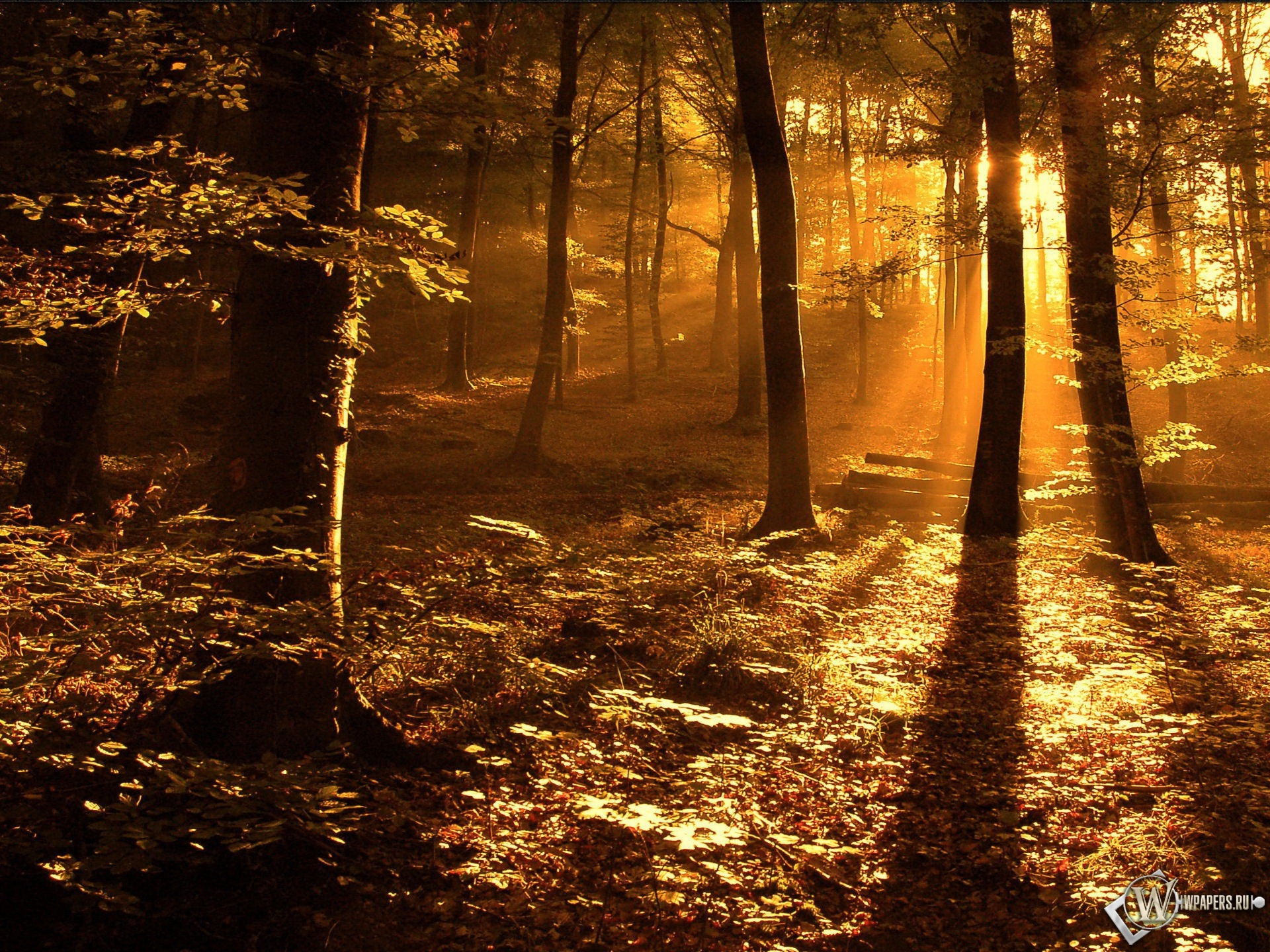 Свет в лесу 1920x1440
