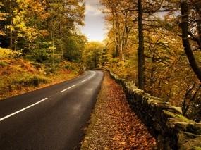 Обои Осенняя дорога: Дорога, Осень, Осень