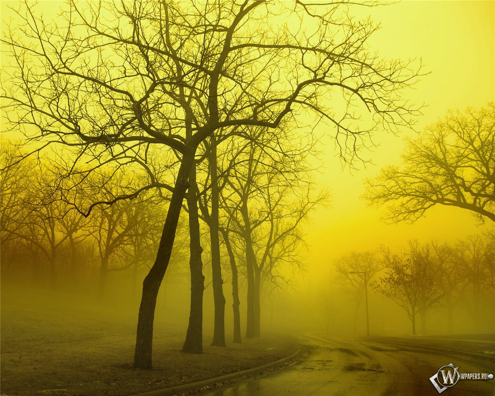Туманный и осенний лес 1600x1280