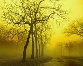 Туманный и осенний лес