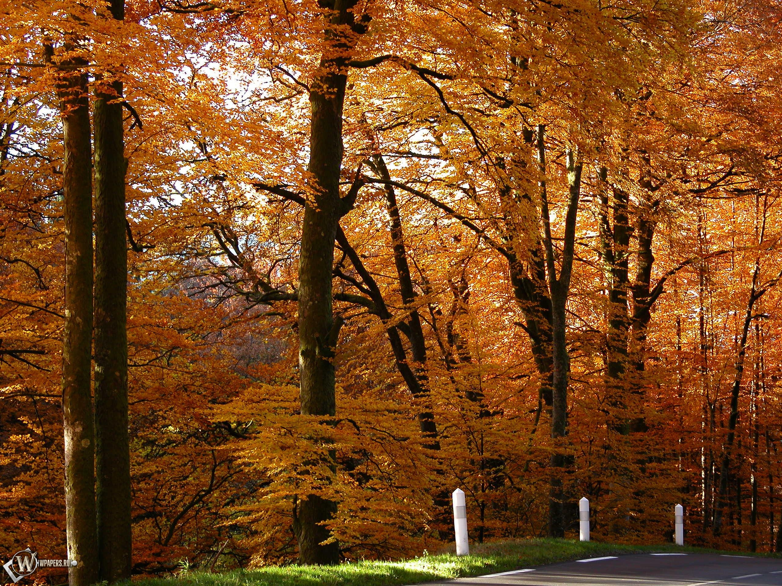 Золотой лес 2560x1920