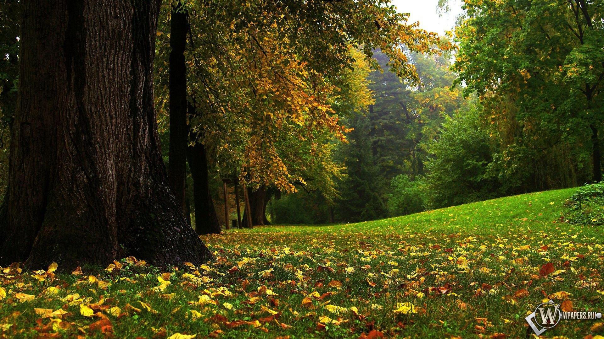 Сказочный лес 1920x1080