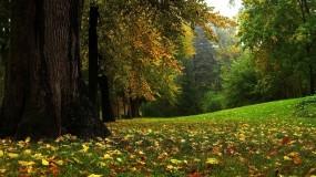 Обои Сказочный лес: Лес, Осень, Осенний лес, Осень