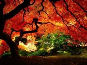 Обои Осенний пейзаж: Природа, Осень, Дерево, Осенний лес, Осень
