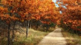 Обои Осенний лес: Лес, Деревья, Природа, Осень, Тропинка, Осень