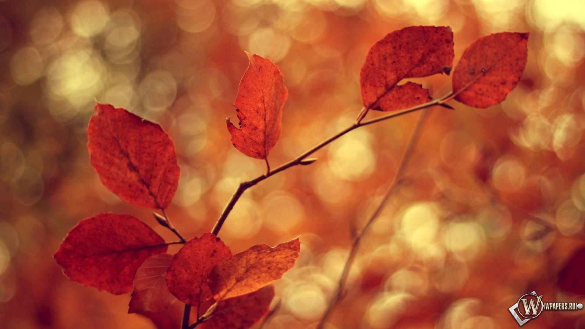Осеннее настроение 1920x1080