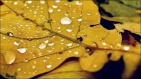 Обои Осенний лист: Осень, Лист, Капли воды, Осень