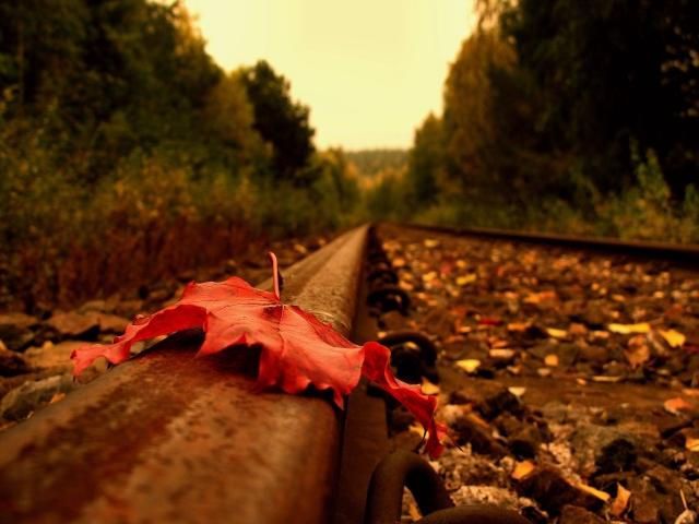 Осенний лист на рельсе