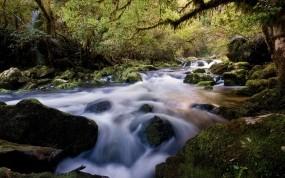 Обои Лесной ручей: Река, Лес, Камни, Ручей, Прочие пейзажи