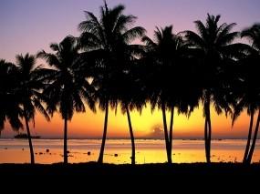 Обои остров Аитутаки: Пальмы, Остров, Закат, Прочие пейзажи