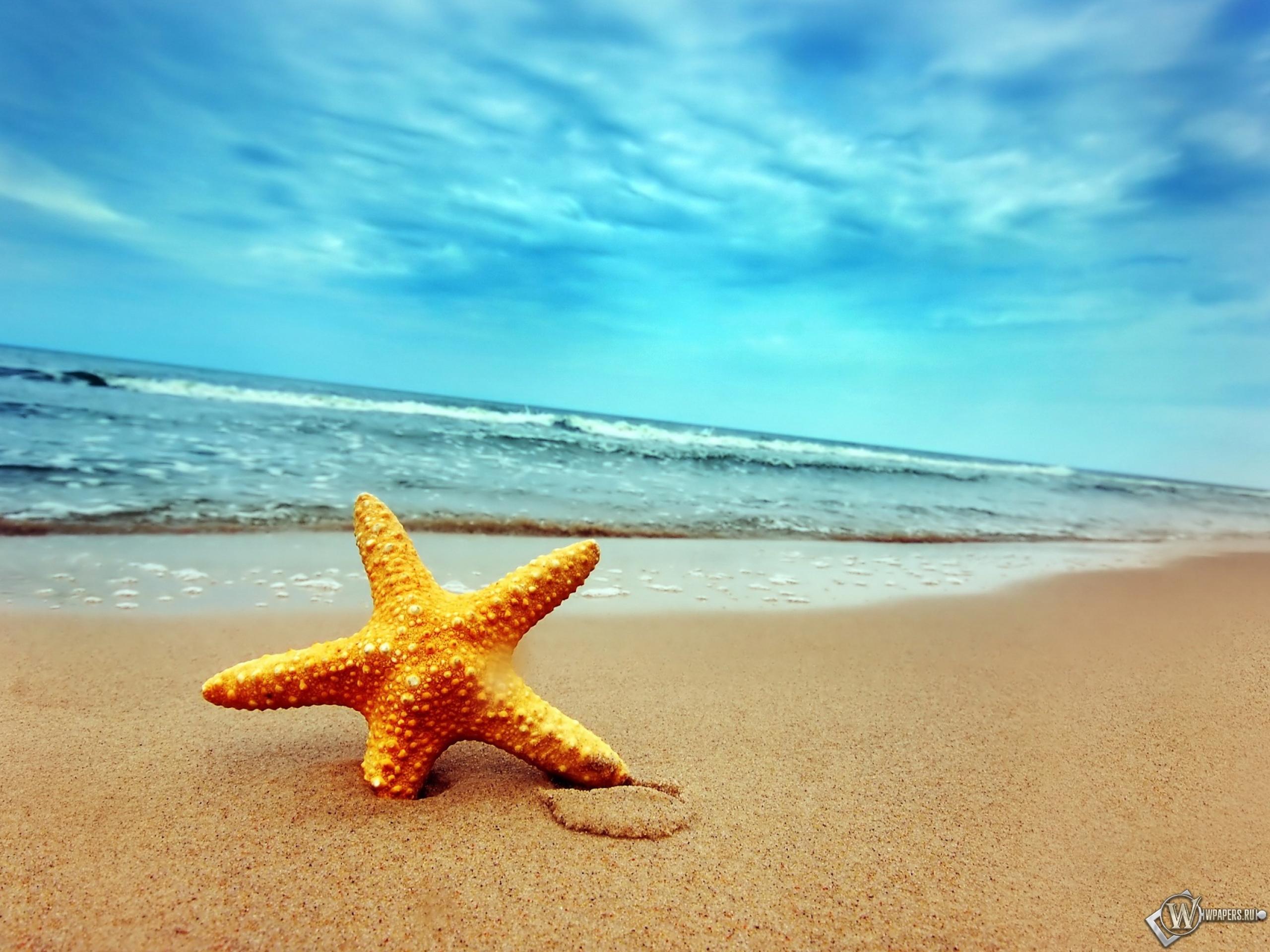 Фото морской пляж летом