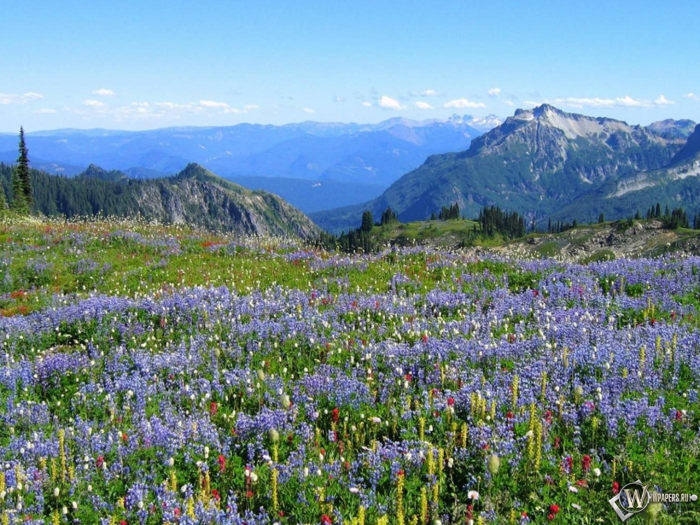 Альпийские луга 1400x1050