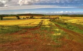 Обои Дорога среди поля: Дорога, Поле, Лето, Прочие пейзажи