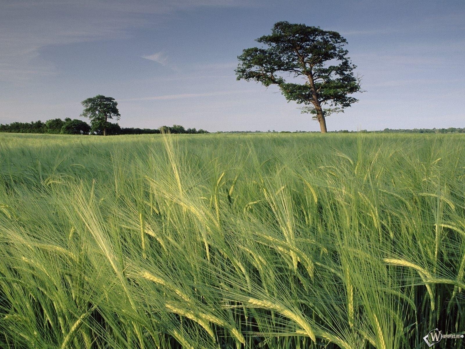 Колхозное поле 1600x1200