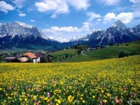 Обои Countryside Splendor: Горы, Франция, Цветы, Прочие пейзажи