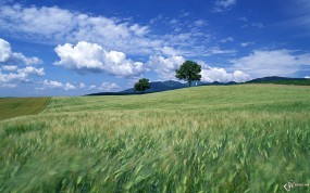 Обои Ветер в поле: Облака, Ветер, Поле, Небо, Прочие пейзажи