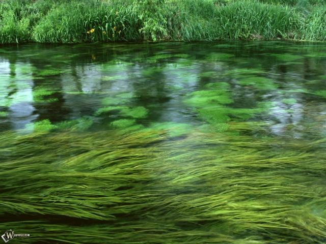 Трава в ручье