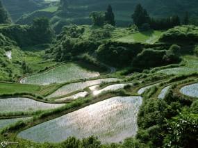Обои Рисовые поля: , Прочие пейзажи