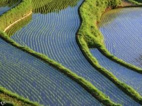 Обои Рисовое поле: , Прочие пейзажи